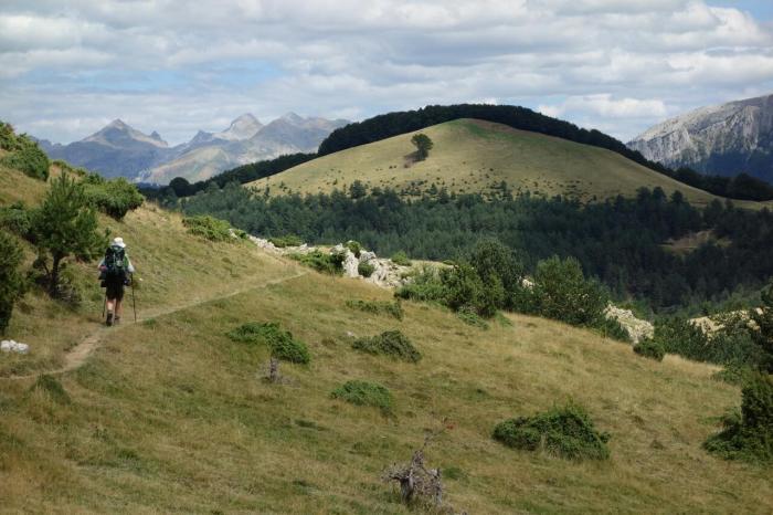 grassy uplands