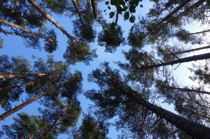 looking up at forest