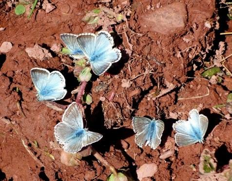 Buterflies shrunk