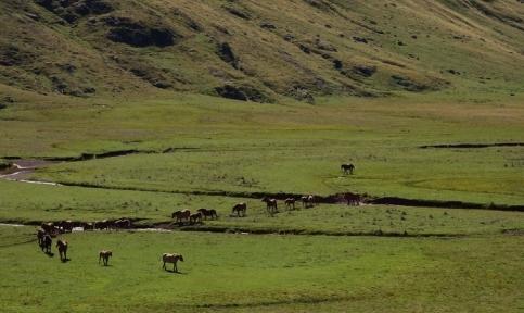 Horses cross shrunk