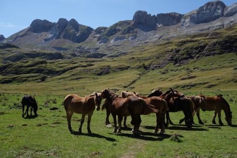 Horses shrunk