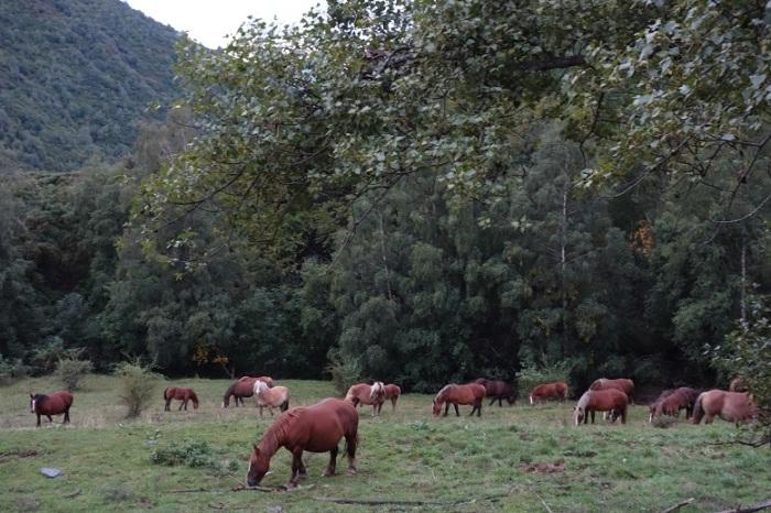 Ponies nirbos 2