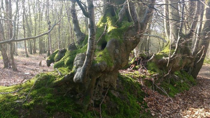 woodbank25